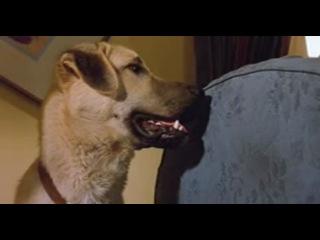 Кошки против сабак(комедия)в телефонном формате.мр4